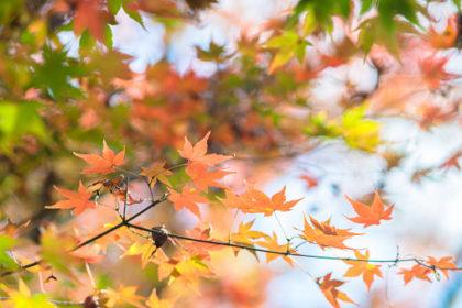季節の変わり目 秋